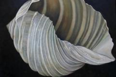 shell-Kopie