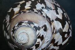 shellsmall-Kopie